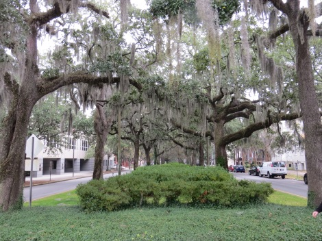 Beautiful Savannah and its many Live Oaks and Spanish Moss!